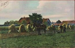 Baarn Bij Utrecht Augustus August Oogst Landbouw Agriculture Farm Harvest Recolte Horse Cheval Paard - Baarn