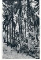 CPA MARRAKECH -la Montée Aux Palmiers - Marrakech