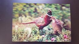 Old NORTH KOREA  Postcard -  Pheasant Bird  - STEREO 3D PC - - Rare!!! - Korea, North