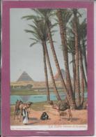 LE CAIRE Palmiers Et  Pyramide - Cairo
