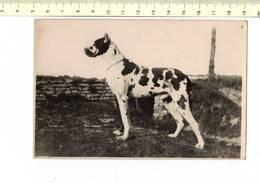 DIEREN 257 - CHIEN - DOG - HOND - L'ETALON ROLF DE CHAVIGNY L.O.S. H 32641 GRAND PRIX - Hunde