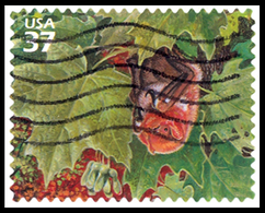 Etats-Unis / United States (Scott No.3899c - Northwest Decidious Forest) (o) - Verenigde Staten