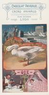 Oiseaux : Chocolat - Payraud : ( Oie ) Format : Petit : 7,3cm X 14cm - Birds