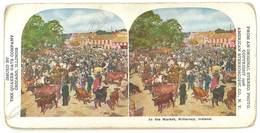 Photo Stéréoscopique : Irlande , In The Market, Killarney  ( Boeufs, Vaches, Cow ) - Photos Stéréoscopiques
