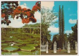 ILE MAURICE - MAURITIUS - Le Jardin Botanique De Pamplemousses - Multivues - Maurice