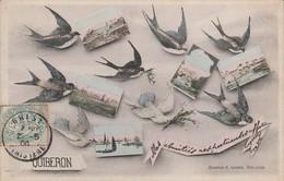 56 - QUIBERON  - Souvenir - Quiberon