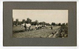 Photo  Attellage  Boeufs Agriculture - Beroepen
