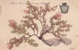 CARTE FANTAISIE - AJOUTIS - ALGUES MARINES COLORATION NATURELLES - 1903 - Otros