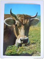 Cpsm Suisse Vache Koe Edit Rud. Suter - Vaches