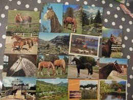 LOT  DE 59 CARTES POSTALES  DE CHEVAUX - Cartes Postales