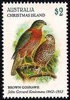 Christmas Island 2018 - Bird - Brown Goshawk - Christmas Island