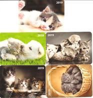 5 Packet Calendars  Cats  2019  Estia - Calendars