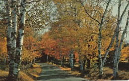 Greetings From Kirkland Lake, Ontario   Fall Foliage - Ontario