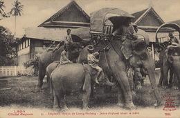 Laos éléphants Royaux De Luang Prabang - Laos