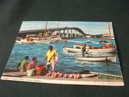 Conchiglia Shell  COQUILLES   CONCHAS  VENDITORE DI PESCE E CONCHIGLIE  BRIDGE TO PARADISE ISLAND NASSAU BAHAMAS PONTE - Pesca