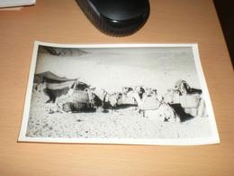 Afganistan Old Photo - Afghanistan