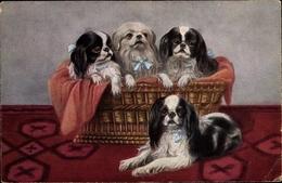 Artiste Cp Hundeportrait, Cavalier King Charles Spaniel - Dieren
