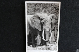 R-34 /  Uganda,  The Queen Elizabeth National Park -  Elephant   /  Circulé 19?.- - Uganda