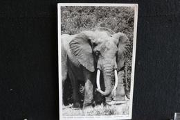 R-34 /  Uganda,  The Queen Elizabeth National Park -  Elephant   /  Circulé 19?.- - Oeganda
