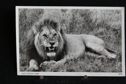 R-35 / Afrique Kenya  -  East African Game, Lion   /  Circulé 19?.- - Uganda