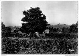 71 SAINT AMOUR BELLEVUE - Les Thévénins Et Le Bourg - Other Municipalities
