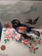 Fold-out Bird Greetings, Crepe Paper 3-D When Unfolded, 1900s Vintage Postcard - Mechanical