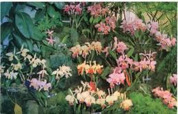 Lote PEP1064, Colombia, Postal, Postcard, Medellin, Club De Jardineria, 10034, Orchid - Colombia