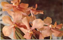 Lote PEP1065, Colombia, Postal, Postcard, Orquideas, 809 Orchid - Colombia