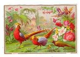 Rare Chromo BOGNARD & DECHAVANNE, Sorisi BD 4-1 / 3, Paon, Pfau - Trade Cards