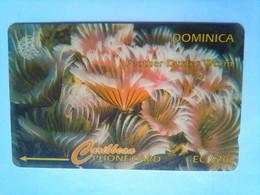 9CDMG Feather Duster Worm EC$20 - Dominique