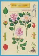 France Année 1999 Feuillet  N°25** Thème Roses Anciennes  Lot 129 - Neufs