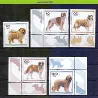 Mwe2682 FAUNA HONDEN ZOOGDIEREN COLLIE ST  BERNARD DOGS MAMMALS HUNDE CHIENS PERROS DEUTSCHLAND 1996 ONG/MH - Honden