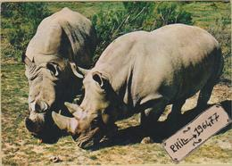 Rhinocéros - Cpm / Couple Rhinocéros. - Rhinocéros