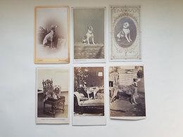 "Lot 6 Anciennes Photos De Chien - J. Ganz / Radoult Vaury / Ghemar Freres / Camille Rensch"" - Vers 1860 - Photos"