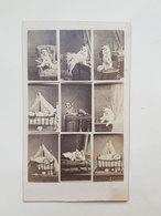 Ancienne Photo Composée De Chien Et Chat Dans Différentes Postures - Vers 1860 - Photos