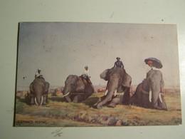 41d  ELEPHANTS RESTING - India