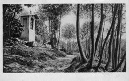 [DC7958] CPA - VALLECROSIA - SENTIERO BOSCHIVO - Viaggiata 1952 - Old Postcard - Imperia
