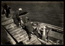 29 - Crozon Morgat - Debarquement Des Thons #09709 - Morgat