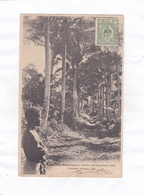 CPA : 14 X 9  -    Nouvelles-Hébrides.  -  Avenue Des Cocotiers à Vila - Vanuatu