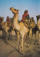 AN67 Ethnic - Chad, Chameliere Arabes - Africa