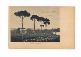Cartolina - Postcard / Non Viaggiata / Unsent / Capua (CE) - Panorama - Italia