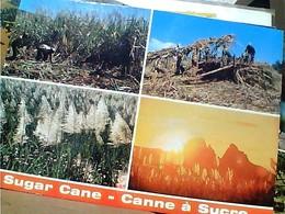 ILE MAURICE , MAURITIUS SUGAR  CANNE SUCRE STAMP SELO TIMBRE CHAMPS DE MARS, RACE COURSE 2 R.1989 GX5473 - Mauritius