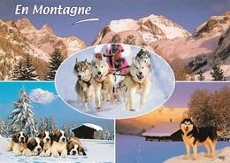 Chiens Husky En Montagne  (2 Scans) - Chiens
