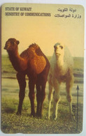36KWTH Two Camels - Kuwait
