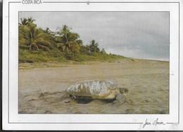 COSTARICA - SPIAGGIA E TARTARUGA -  VIAGGIATA DA NEW YORK 1998 - Costa Rica