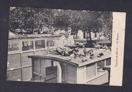 Vente Immediate Guerre 14-18 Pigeons En Service - Le Repos ( Animée Pigeon Voyageur Colombophilie  ) - War 1914-18