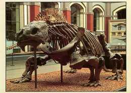 Dinosaure : Squelette De Bradysaurus Au Museum Der Humboldt Universitat Zu Berlin - Animaux & Faune