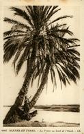 Prière Au Bord De L'Oued  AFRIQUE DU NORD - Postcards