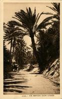 Oasis Un Sentier Dans L'.....  AFRIQUE DU NORD - Postcards