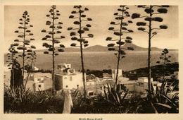 SIDI BOU SAID.....  AFRIQUE DU NORD - Postcards
